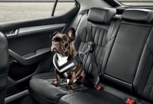 На авто с собачкой
